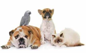 flexible packaging solution for Pet Food industry
